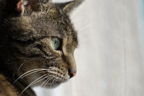 What is Pet Mesh and What are the Options?